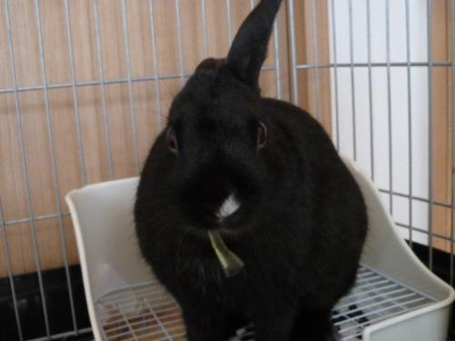 ウサギのソルト 5