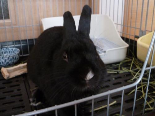 ウサギのソルト 4