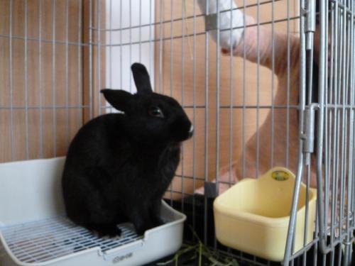 ウサギのソルト 3