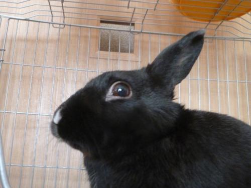 ウサギのソルト 2