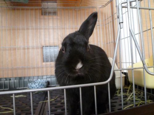 ウサギのソルト 1