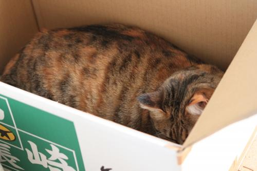 箱入り 2