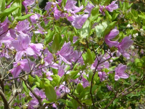 花だよ 2