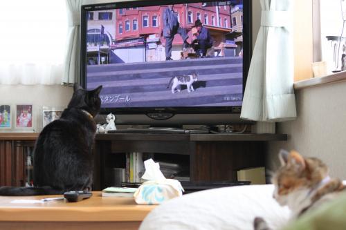 猫歩き 3