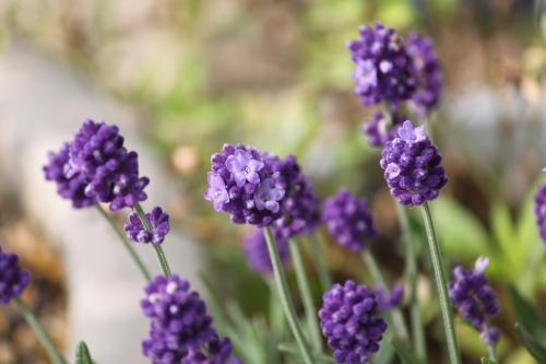 花いろいろ 2