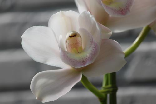 花いろいろ 1
