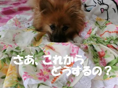 024繝シ繧ウ繝。繝ウ繝・convert_20140828201535