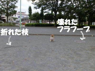 005繝シ繧ウ繝。繝ウ繝・convert_20141010224407