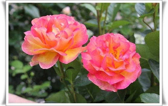 s-140524ラパリジェンヌIMG_4675