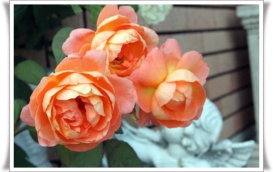 s-140705レディ・エマ・ハミルトンIMG_9344