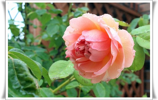 s-140707ソニア・リキエルIMG_9406