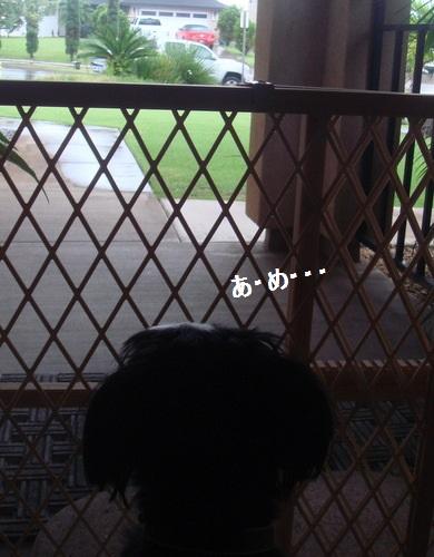 DSC05027-001moji.jpg