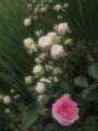 mosimosi0154.jpg