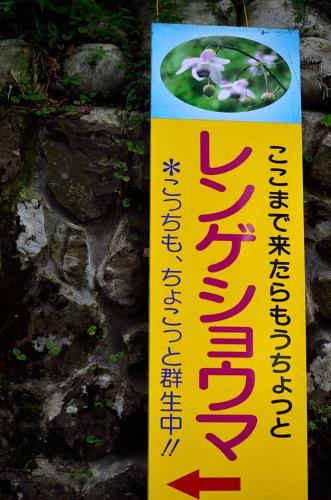 _御岳山DSC_0141