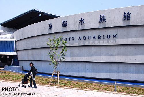 結婚式の写真 京都・町家のウエディングフォトグラファー日記-京都水族館