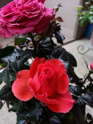 20140301 minibara_R