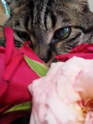 よしおと赤いバラ_R