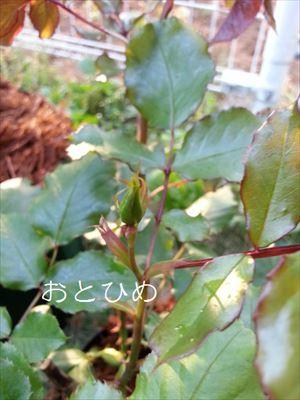 20140426otohime_R.jpg