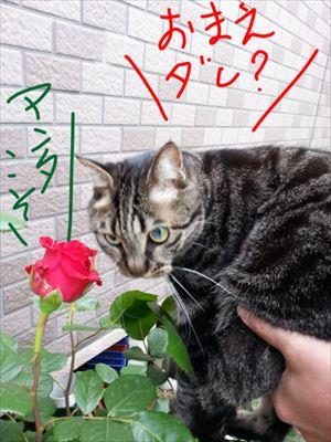 20140519yoshi03_R.jpg