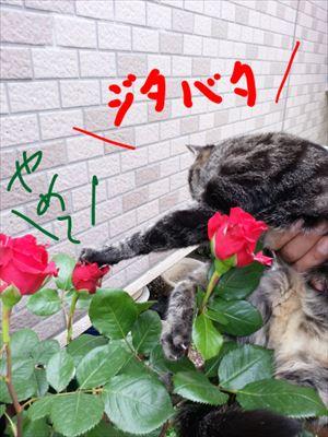 20140519yoshi05_R.jpg