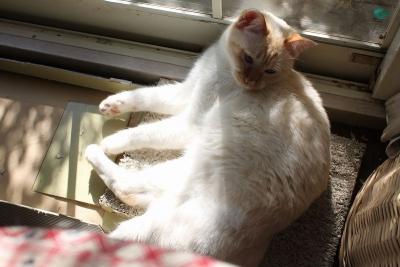 陽だまりでお昼寝のシロIMG_4164