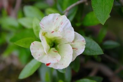 緑花の泉IMG_4362