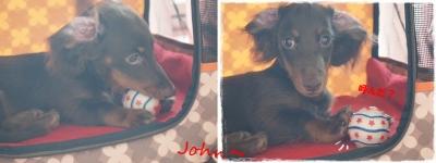John②-horz