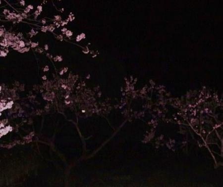 桃花源の入口