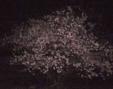 仙女峰の月夜