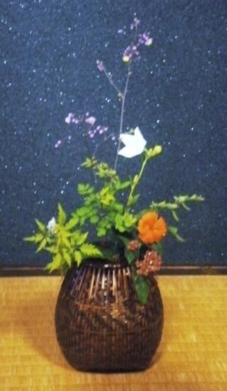 後楽園 紫錦唐松