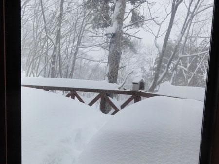 ホントに大雪!!1