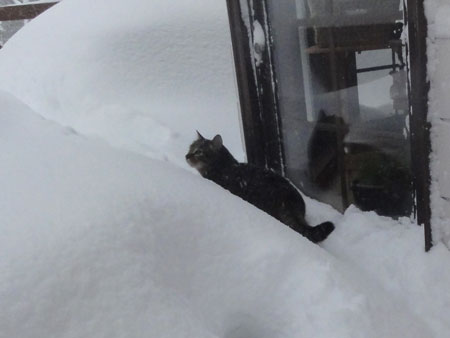 ホントに大雪!!5