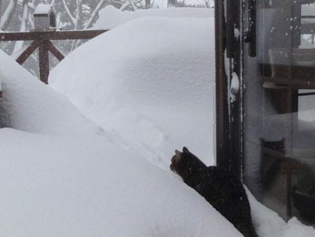 ホントに大雪!!6