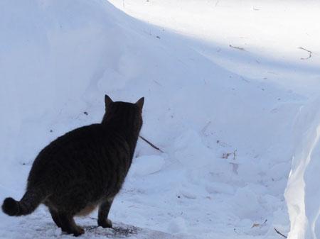 雪、雪、雪・・・2