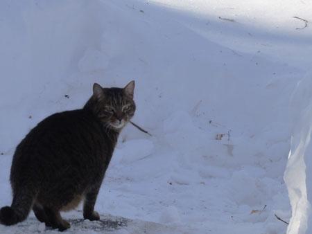 雪、雪、雪・・・3