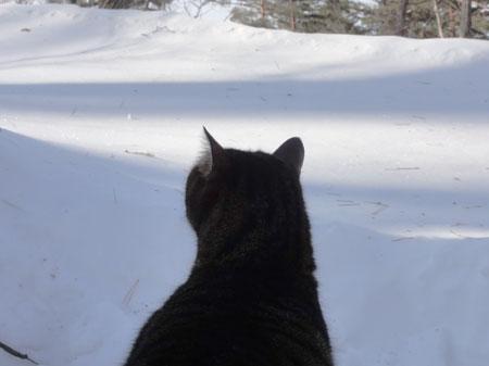 雪、雪、雪・・・5