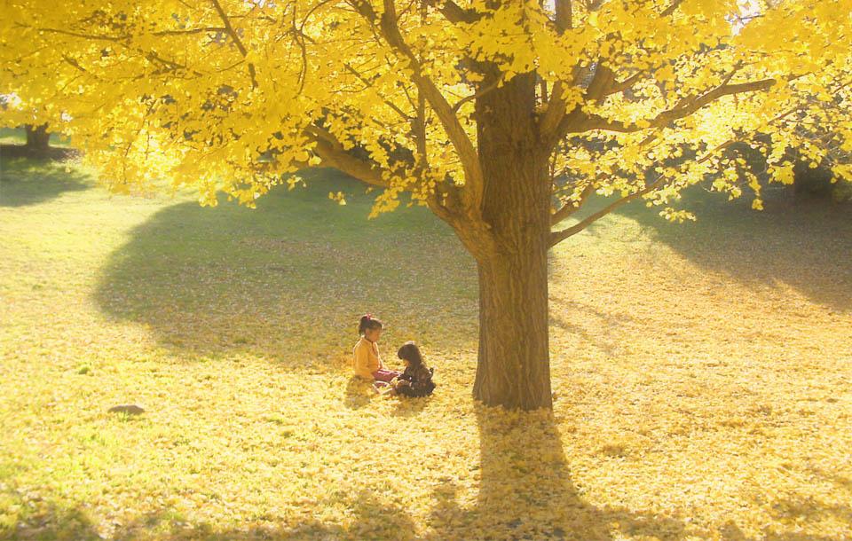 011123-25 銀杏と子供960×610