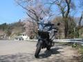 20140414sakurasakura6923.jpg