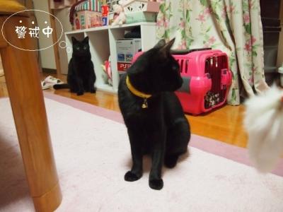 黒猫のタンゴ07