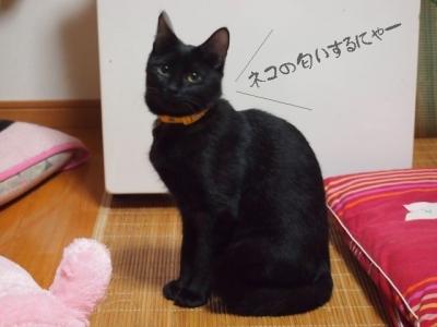 黒猫のタンゴ09