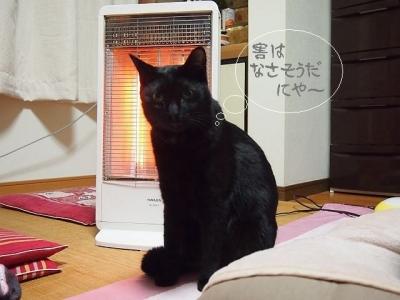 黒猫のタンゴ10