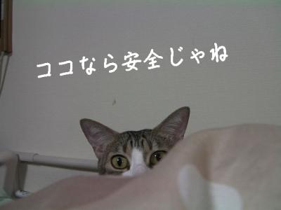 ぱえりあ02