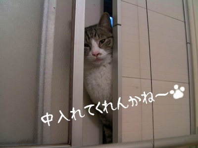 ぱえりあ03