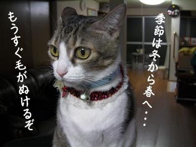 ぱえりあ05
