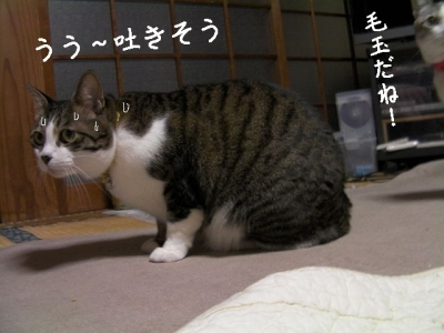 ぱえりあ06