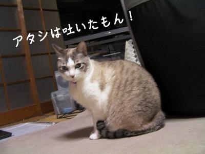 ぱえりあ07