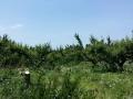 20140524 伐採