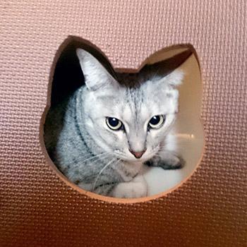 tsuk-window.jpg