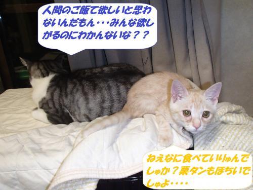 PA222200_convert_20141025124935.jpg