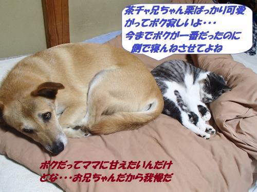 PA232212_convert_20141025125004.jpg